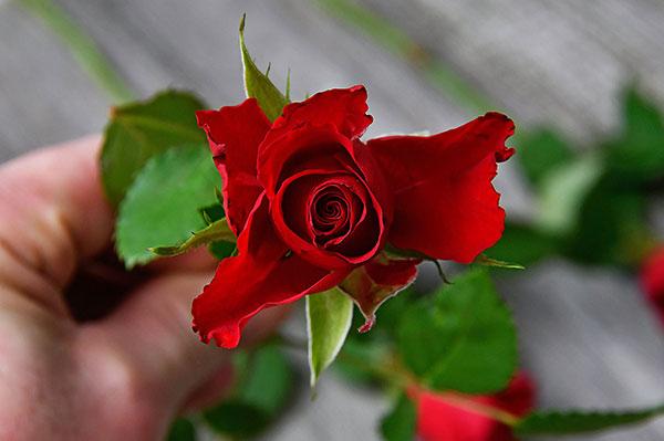 Är Alla hjärtans dag en röd dag?
